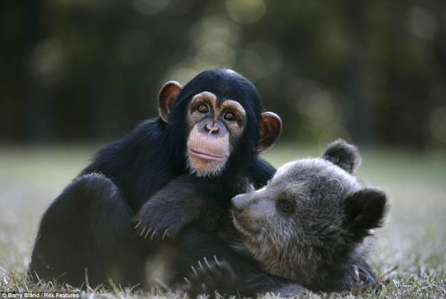 apa och björn