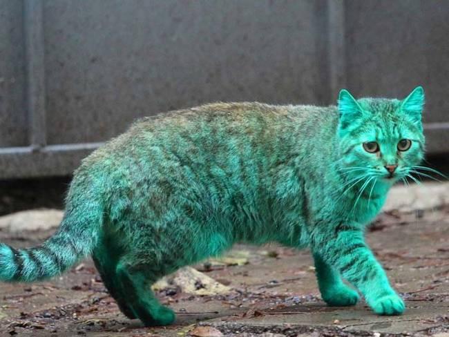 grön katt1