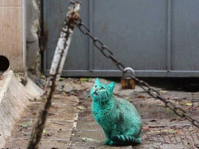 grön katt2