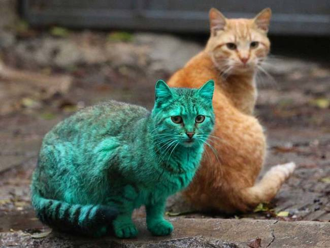 grön katt3