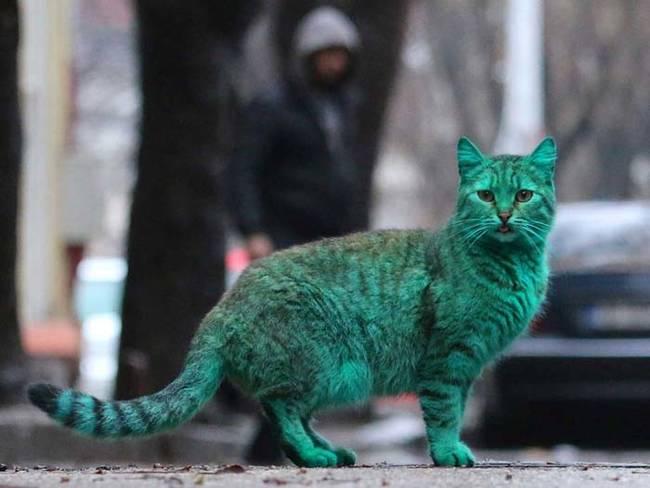 grön katt4