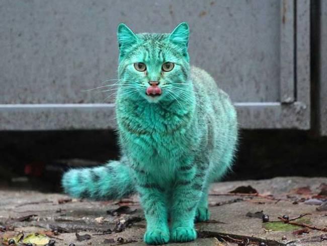 grön katt5
