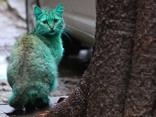 grön katt6