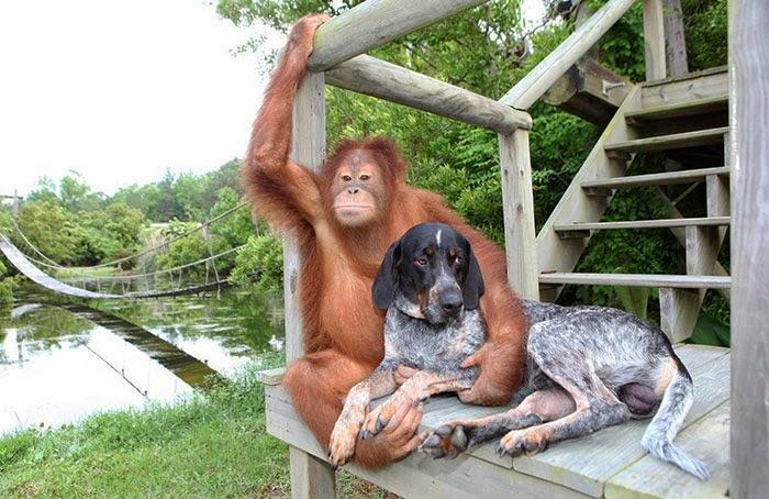 hund och apa1