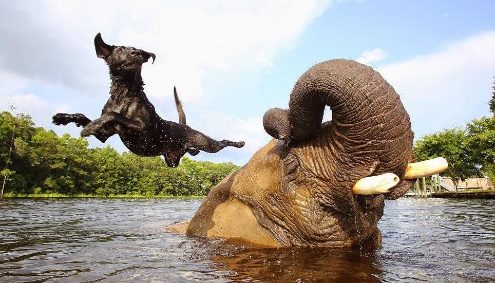 hund och elefant3