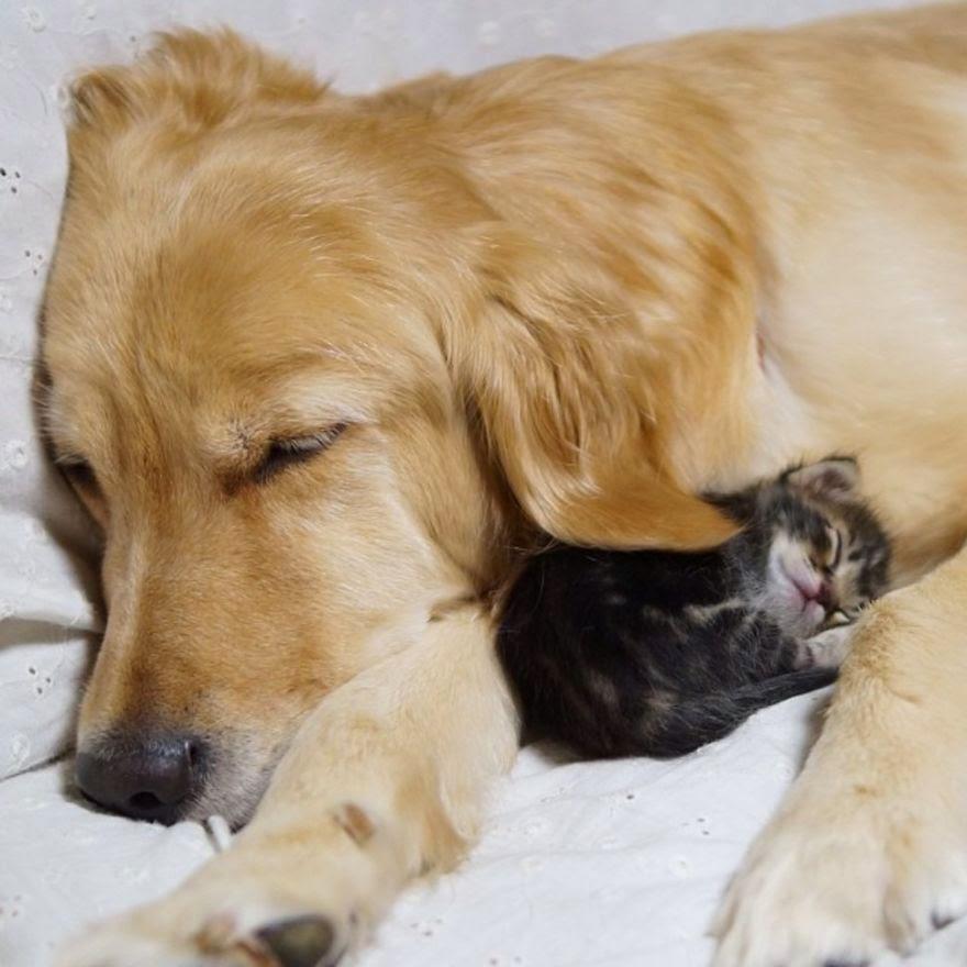hund och katt1