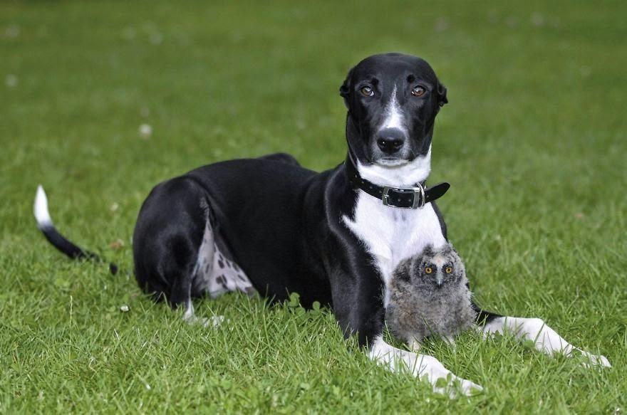 hund och uggla1