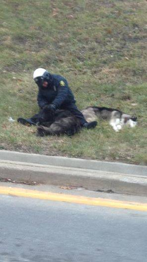 polis och hundar