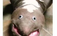 googley eye dog