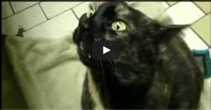 Har du någonsin hört en katt göra de här ljuden innan? Jag blev paff av förundran.